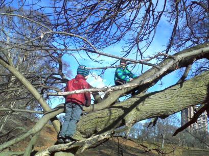 Tree climbing at Jamaica Pond